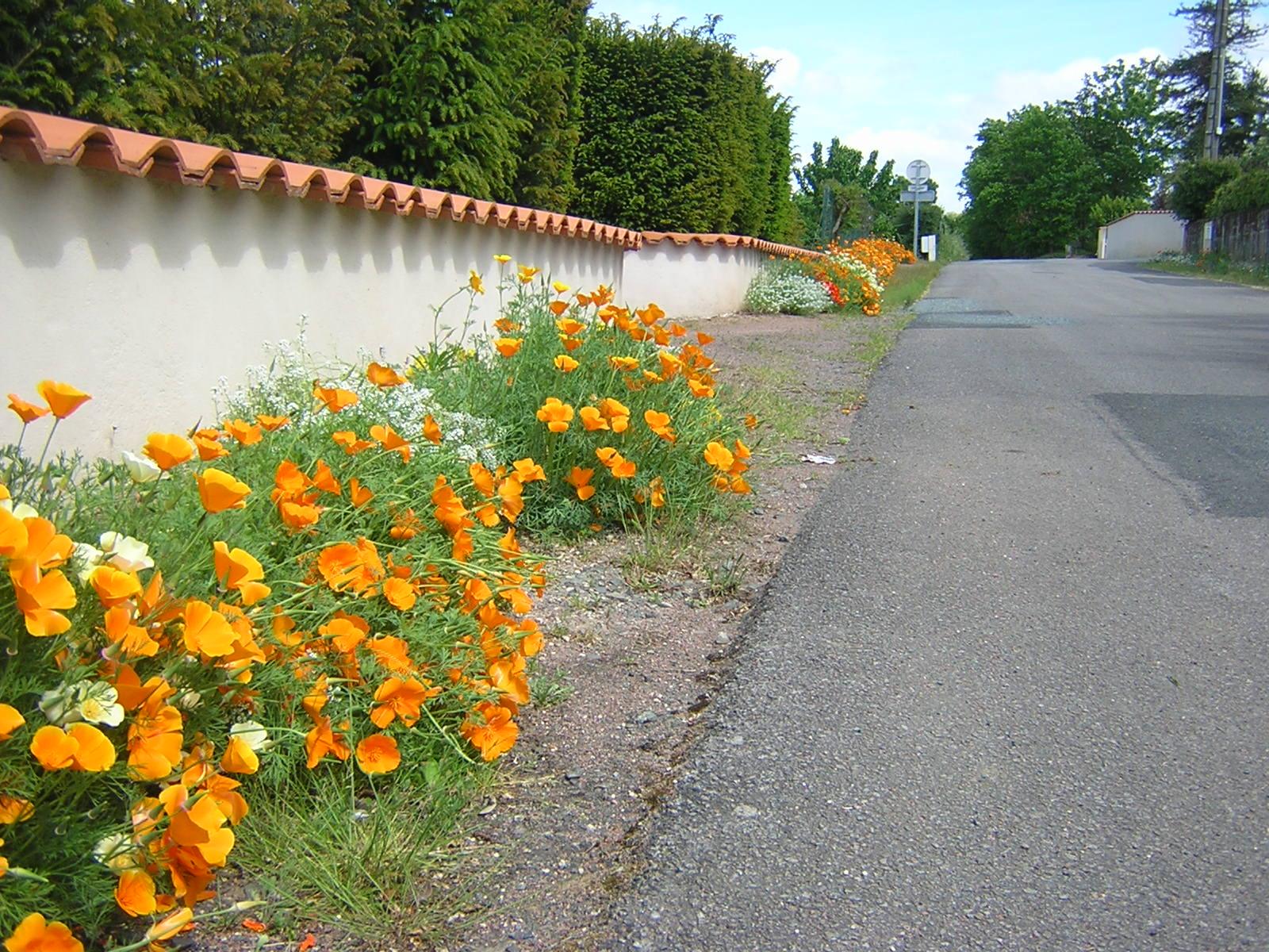 Fleurissement de pieds de murs